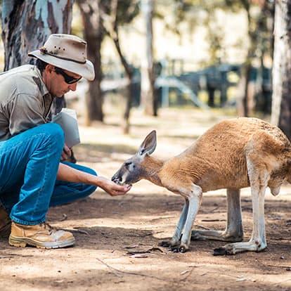 Zoo keeper feed kangaroo