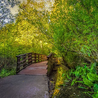 walking path and bridge on Scriber Lake Trail