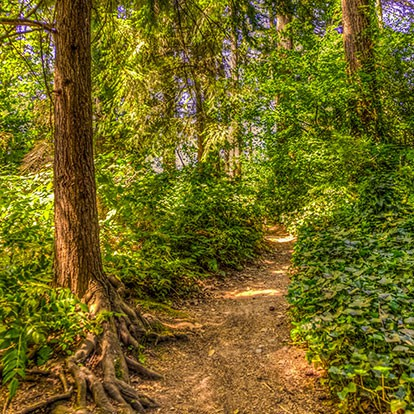 trail through trees at Wilcox Park