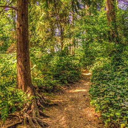 Wilcox Park Trees